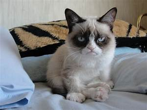 Grumpy Cat Good Morning | Funny Collection World