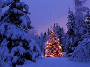christmas christmas tree winter snow christmas lights forest wallpapers hd desktop and