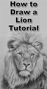 Lion Head Drawing Tutorial