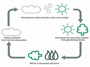 Understanding The Global Carbon Cycle