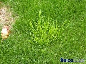probleme dans nouvelle pelouse page 2 With maison humide que faire 7 semer de la pelouse
