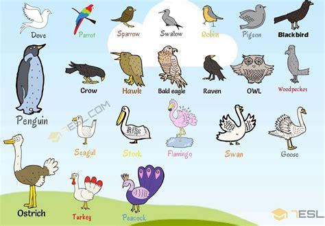 bird names list  birds   birds images birds
