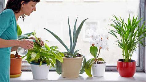 plantas de interior tipos variedades cuidados  riego
