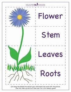 En Flower Parts