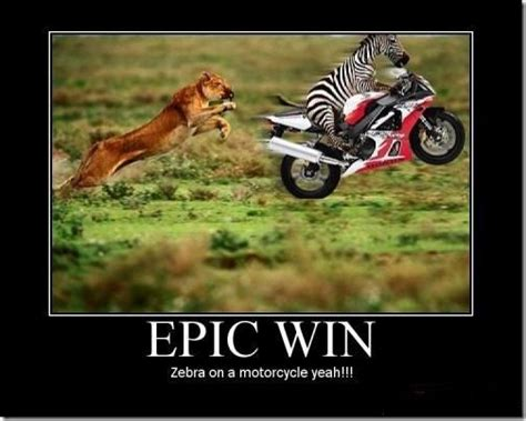 Epic Win Meme - zebra on a motorcycle epic win