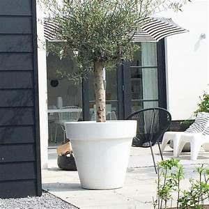 Gros Pot Pour Olivier : les 25 meilleures id es de la cat gorie olivier en pot sur pinterest calcaire de patio douce ~ Melissatoandfro.com Idées de Décoration