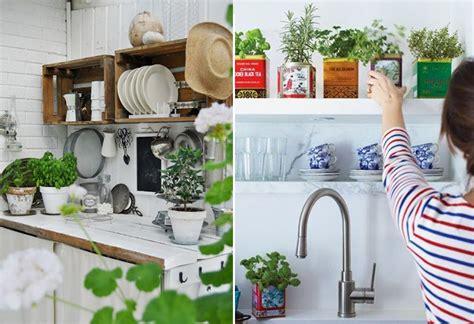 plante cuisine décoration plante cuisine