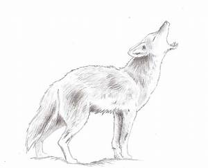 Animal Drawings - Coyote by NausicaaKamiya on DeviantArt