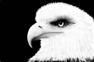 How to Draw an Eagle'S Eye - DrawingNow