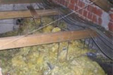Marder Im Haus Und Im Dach Vertreiben