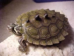 Ringed Map Turtles Must Be the Real Life Ninja Turtles