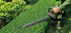 Taille Des Haies : quels outils de jardinage pour tailler une haie ou un ~ Dallasstarsshop.com Idées de Décoration
