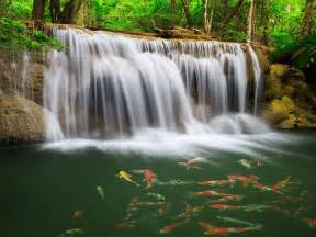 river waterfall coast colorful fish greens water tropical