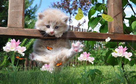 Animated Kitten Wallpaper - sweet kittens animated wallpaper desktopanimated