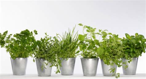 herbes aromatiques en cuisine astuce ciseler les herbes aromatiques