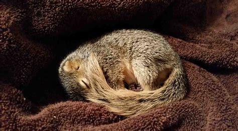 squirrels    major case   mondays