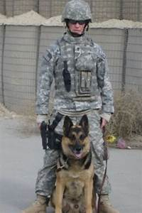 canine military heroes