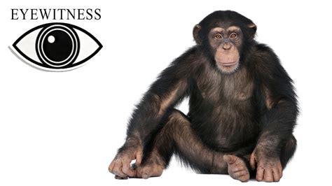 EYEWITNESS | Ape | S2E1 - YouTube
