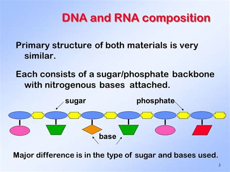 Dna And Rna Structure And Function  Ppt Video Online Download