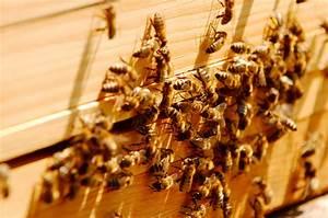 Warum Machen Bienen Honig : warum ist honig nicht vegan ~ Whattoseeinmadrid.com Haus und Dekorationen
