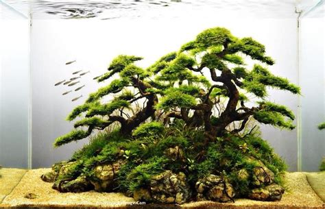 driftwood  java moss faux bonsai aquaria