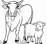 Coloring Cow Pages Cows Getdrawings Colorings sketch template