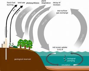 File Carbon Cycle-simple Diagram Svg