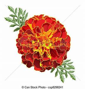 Vector Clip Art of Red Marigold (Tagetes) - Red marigold ...