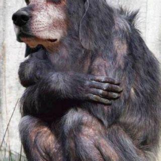Pin by Deb Heber on Strange Photoshopped animals Weird