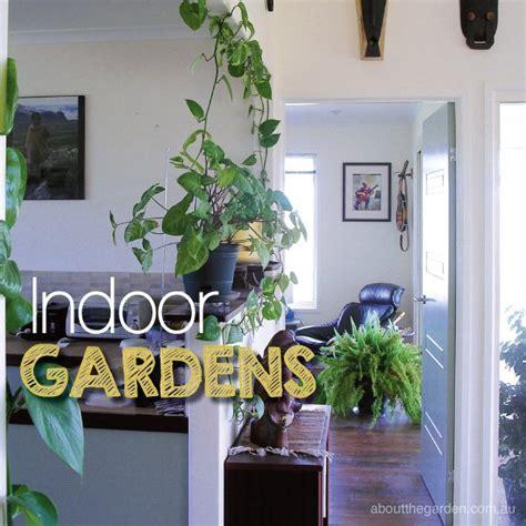 Best Indoor plants to create an indoor garden sanctuary