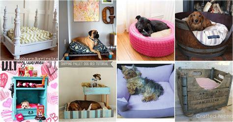 easy diy dog beds  crates    pamper
