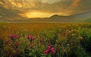 Welcome To Tanelorn: A Field of Late Summer Blooms Wallpaper