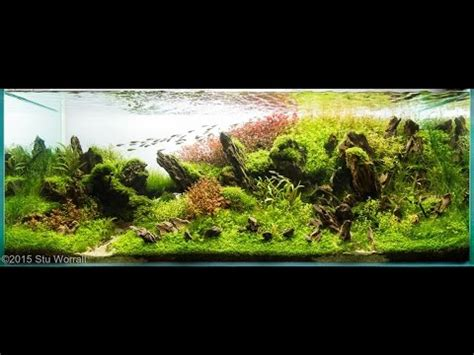 Aquascape World by Best Aquascapes Of The World