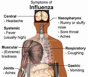 Viral Diseases Of The Respiratory System