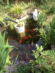 Plante Filtrante Pour Bassin : gestion de l 39 eau au jardin un bassin sans pompe ni filtre c 39 est possible plantez ~ Louise-bijoux.com Idées de Décoration