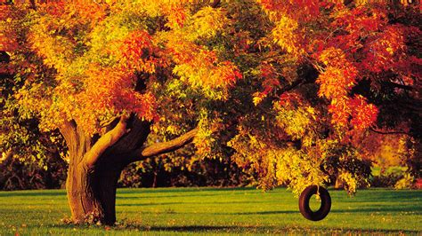 fall trees autumn trees wallpaper 690569