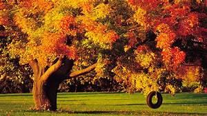 Autumn Trees wallpaper - 690569