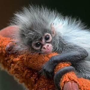 Baby Spider Monkey   Animal Babies   Pinterest