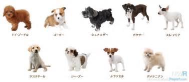 list of cat breeds nintendogs cats breed lists revealed news nintendo