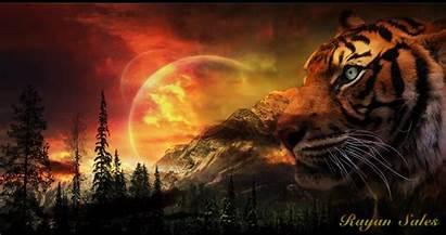 Tiger Wallpapers Desktop Animated Cool Backgrounds Poze