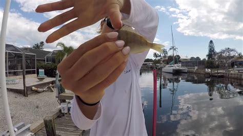 bait fishing pinfish fish florida gulf coast inshore surf offshore redfish catch eat trout tarpon whitebait snook