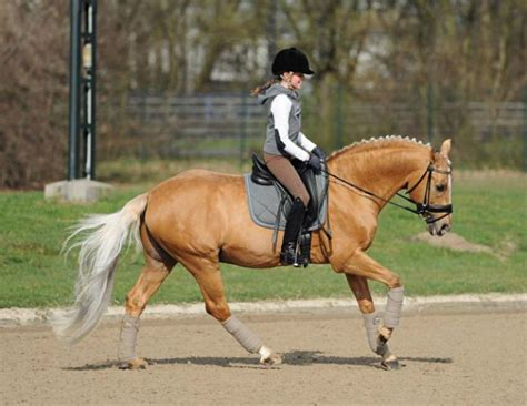 tips    child safe  horseback riding