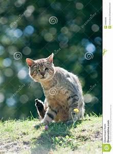 Homeless Cat Royalty Free Stock Photos - Image: 34088288