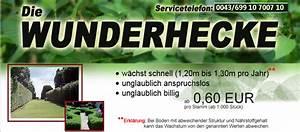 Hecke Schnell Wachsend : ber die wunderhecke ~ Whattoseeinmadrid.com Haus und Dekorationen