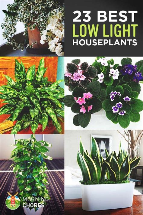 best 25 low light houseplants ideas on indoor