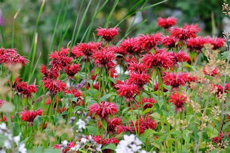 flowers to plant in april flower seeds to sow in april gardenersworld com