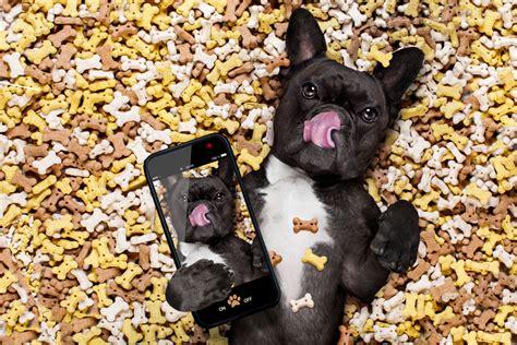 alimenti cani on line cibo per cani dogbauer it alimenti per cani on line