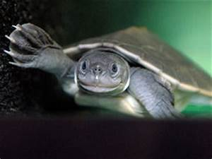 Is this the cutest turtle in the world? | Weird | News ...
