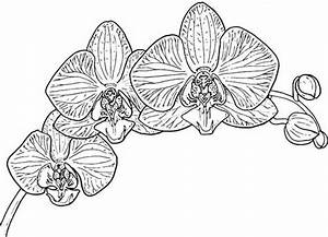 Free Orchid Coloring Sheets In April