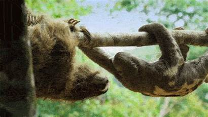 Wild Animals Giphy Pbs Nature Gifs Tweet